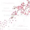 Alexandra Renke Designpapier Blütenzauberschön international